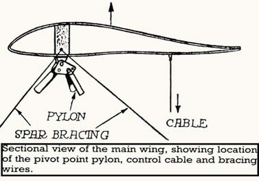 Flying flea-wing