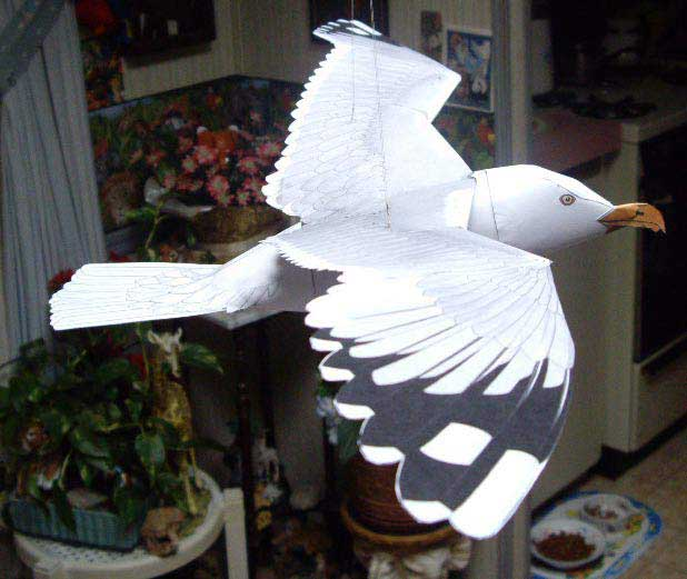 this GULL FLIES!!