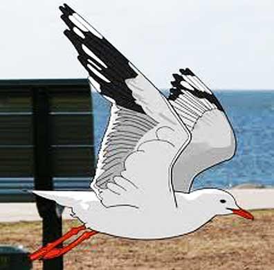 cartooned Herring Gull