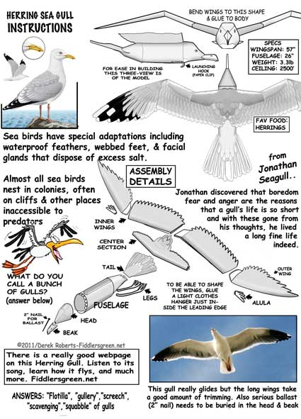 Herring Gull instructions