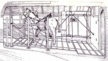 horse-ju52.jpg