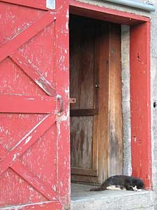 Catw and New England Barn door
