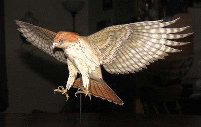 Paper model of a Red Tailed Hawk