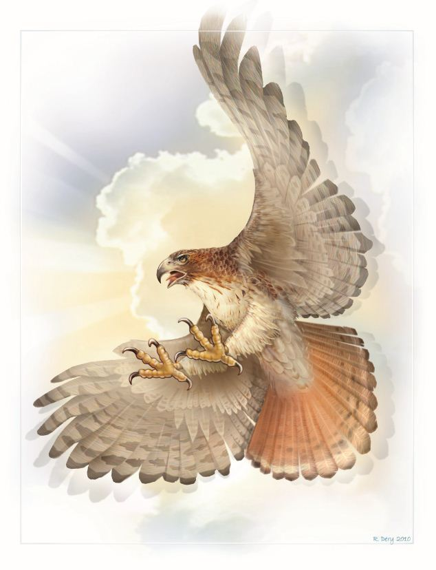 Richar Dery Artwork of the Red Tailed Hawk