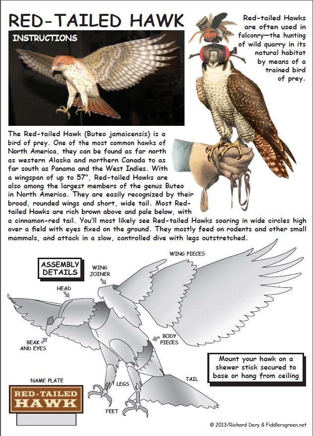 Instructions Sheet for Red Tailed Hawk Hawk Paper Model