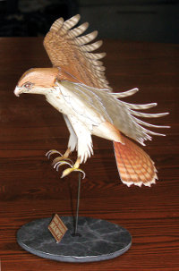 side view of a red tailed hawk paper model