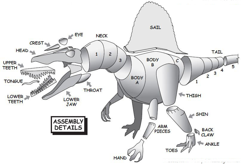 Diagram for spinosaurus paper model